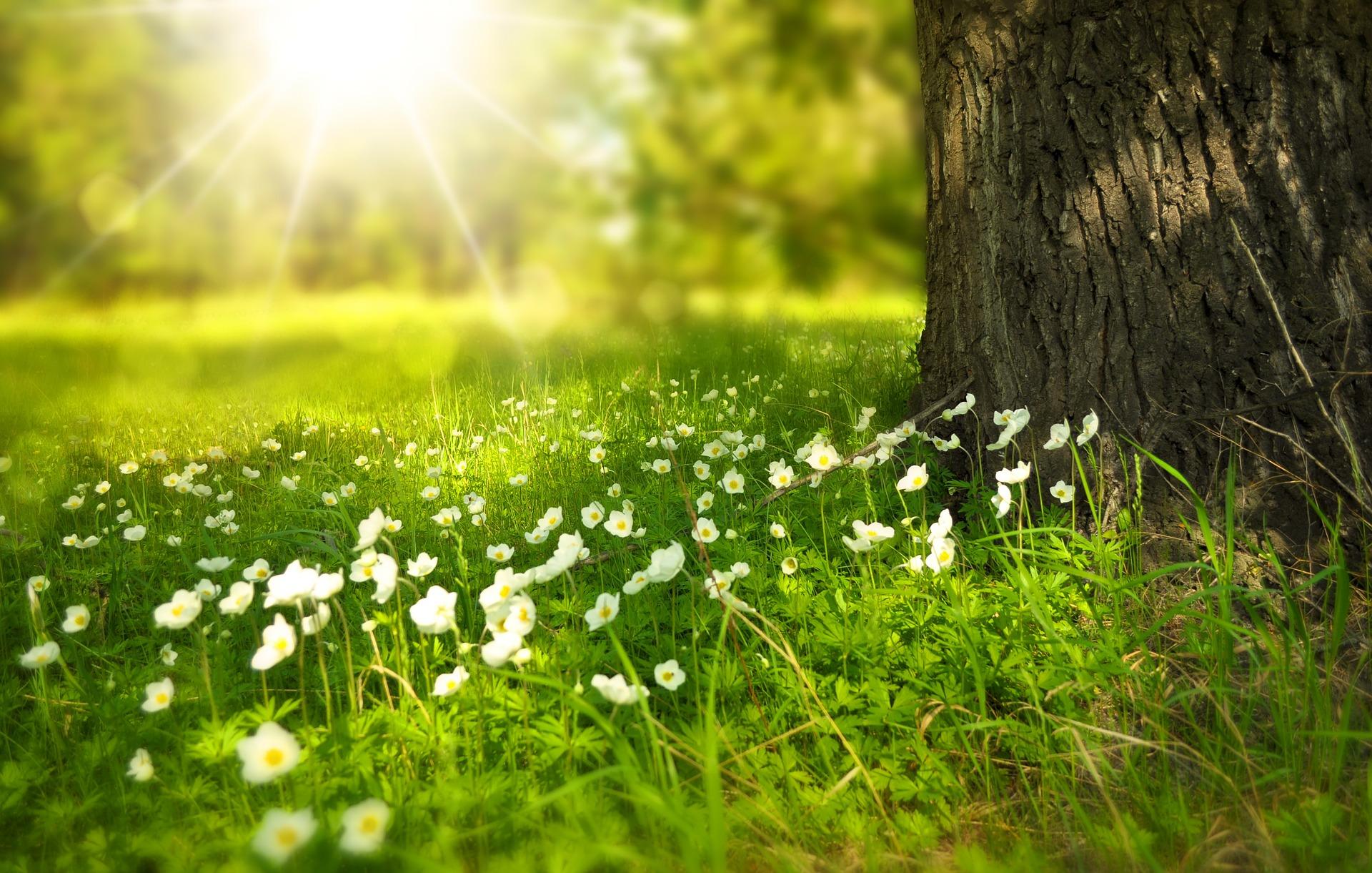 beneficios-del-sol-para-el-medioambiente-plantas