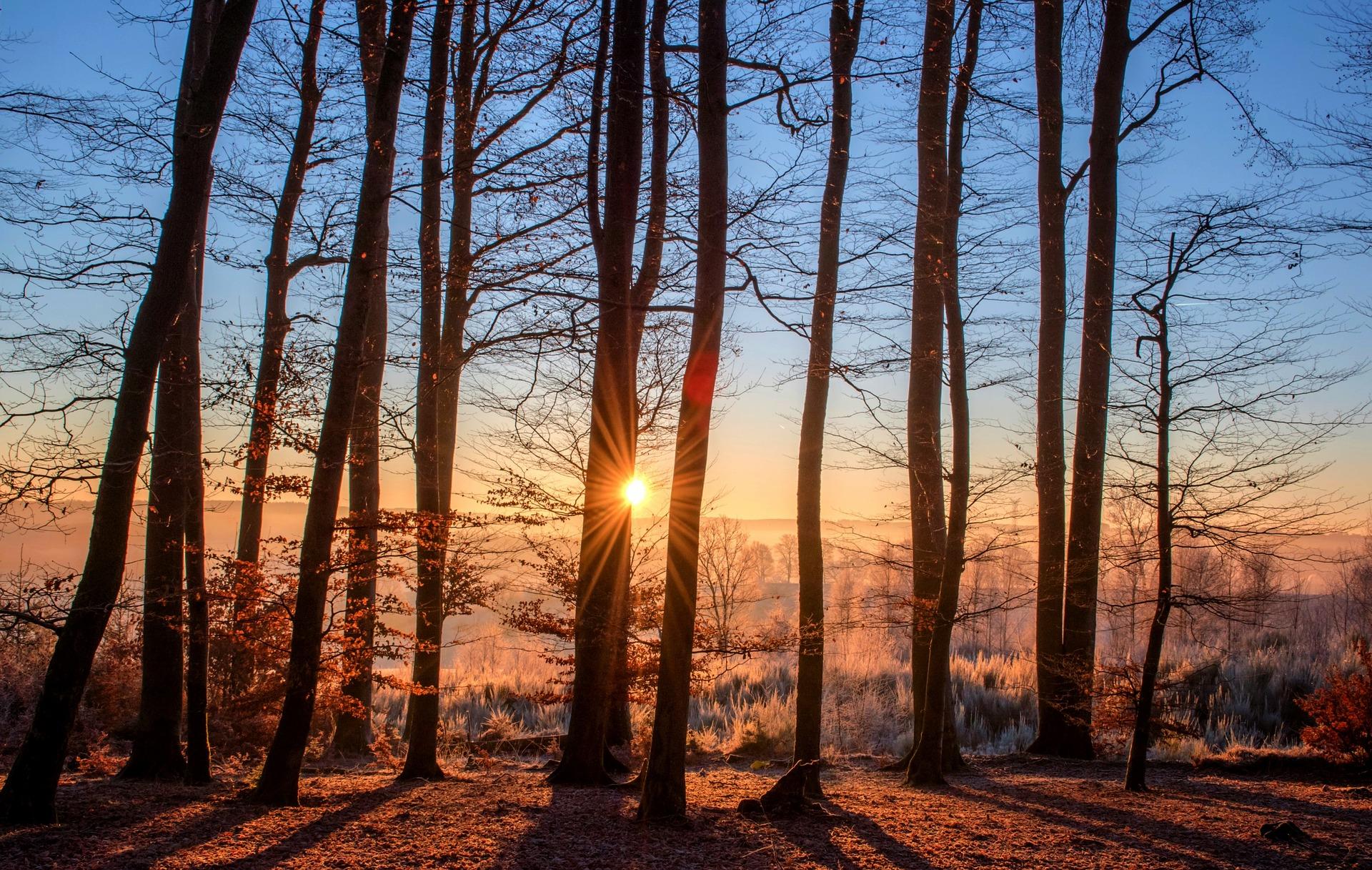 Beneficios del Sol para el medio ambiente